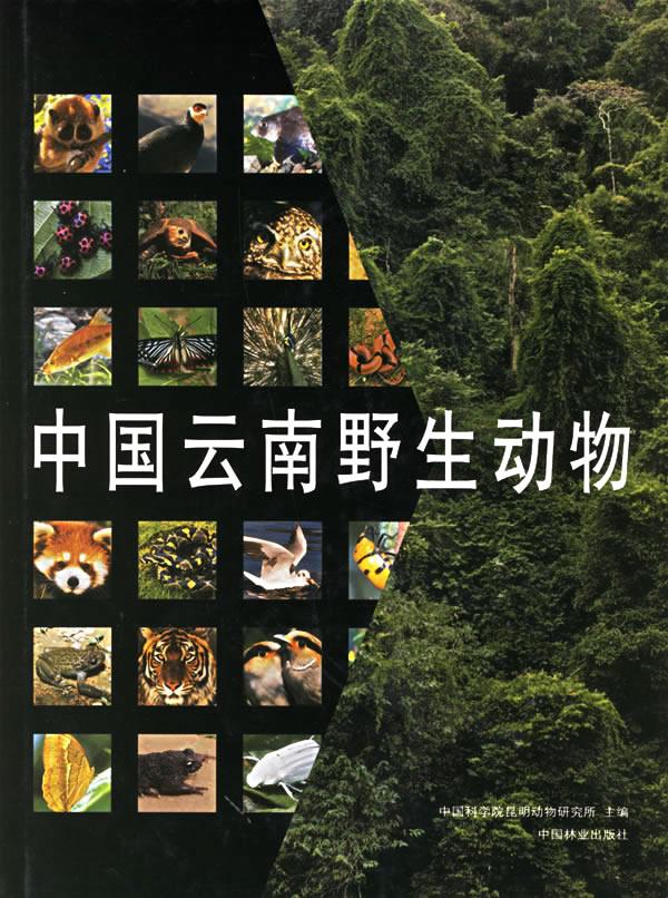 中国云南野生动物