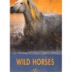 WILD HORSES PAOLO MANILI 野马摄影