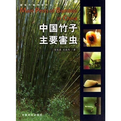 竹子微观结构图片