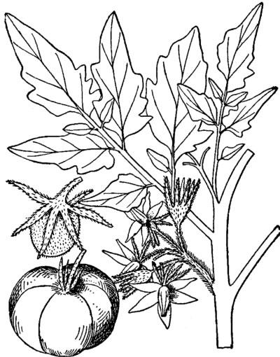 树根茎叶结构图