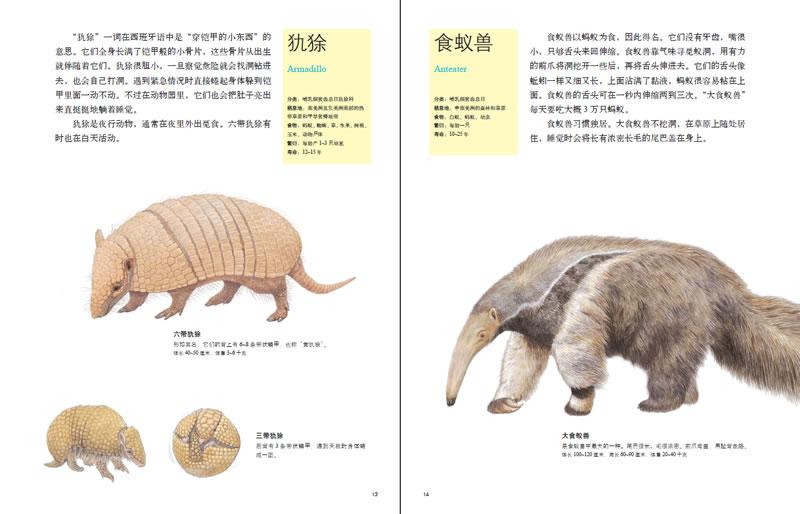 大象 动物 800_514