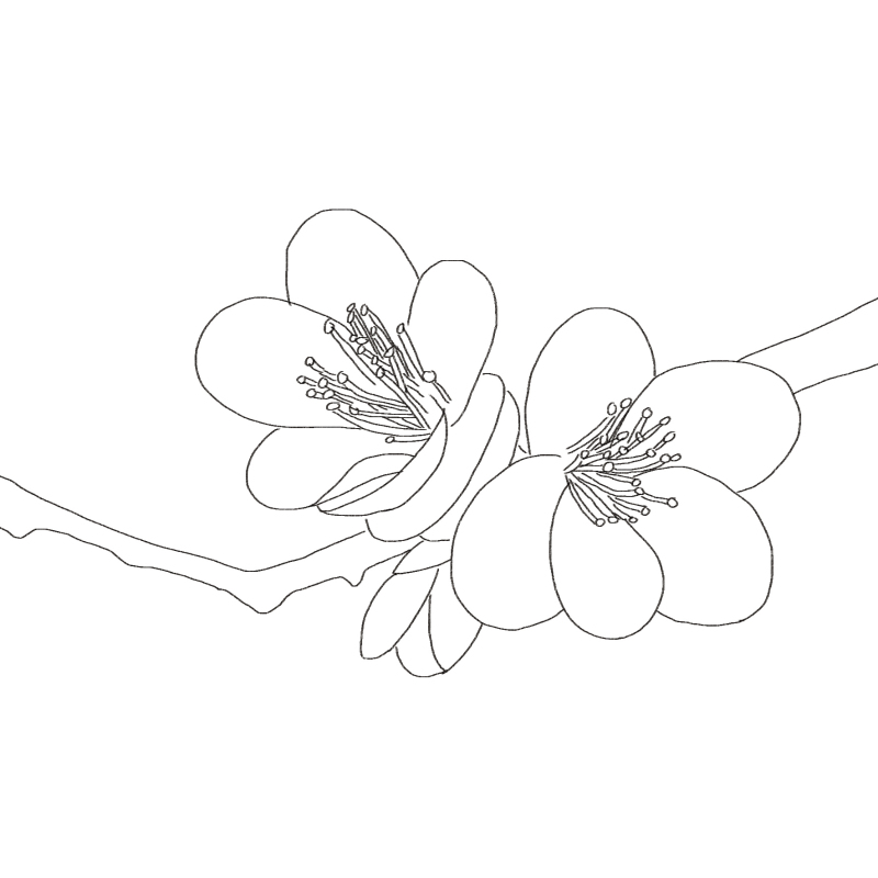 首页 图书 绘画艺术 色铅笔画  作者简介       飞乐鸟    国内新生代