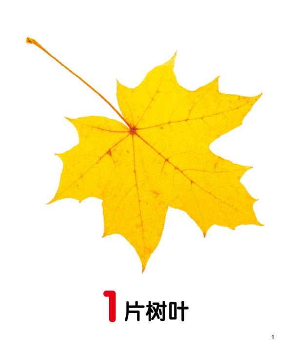 数学树叶剪贴画