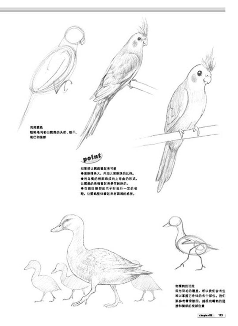 《动物铅笔素描基础入门