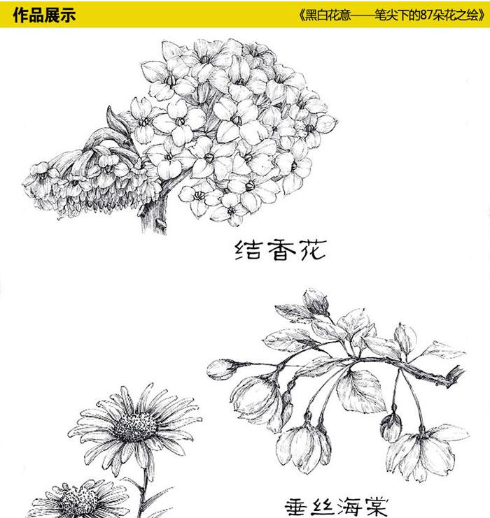 铅笔素描经典花卉