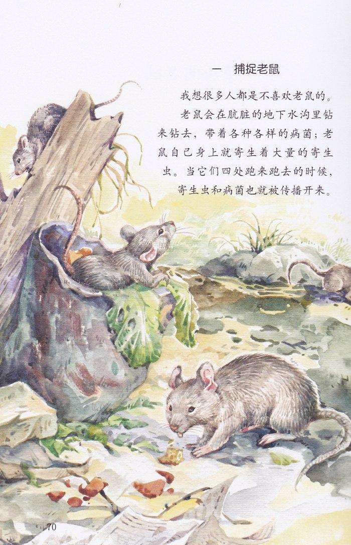 山猫樱桃树国画