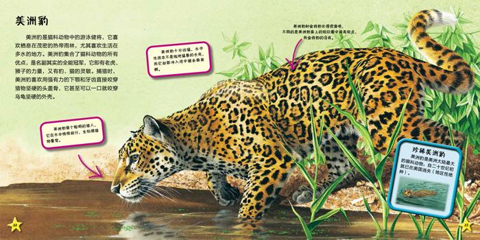我爱动物小百科 猫科动物