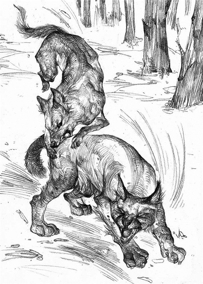 加拿大作家,野生动物画家,博物学家,探险家,环保主义者.