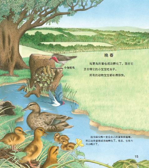 关于春天的动物插画