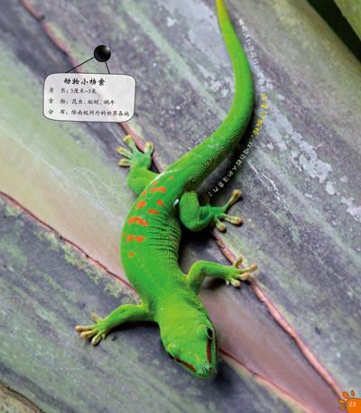 《100种本领非凡的动物·动物中的欺诈高手