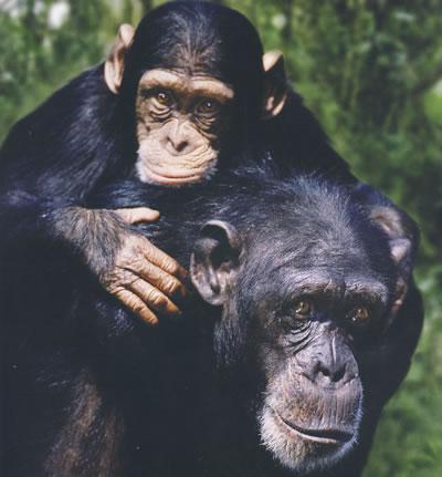 有趣的动物生活,带给你无限的惊讶和趣味