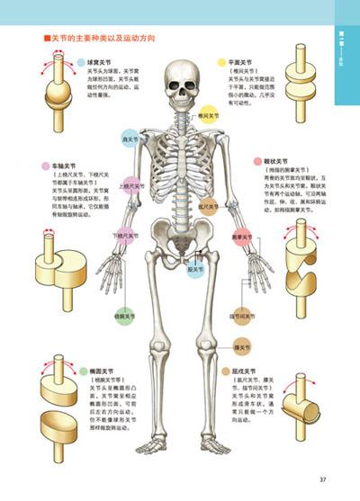 二尖瓣解剖结构图