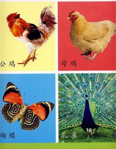 《幼儿启蒙知识挂图:动物·水果·蔬菜·认物》