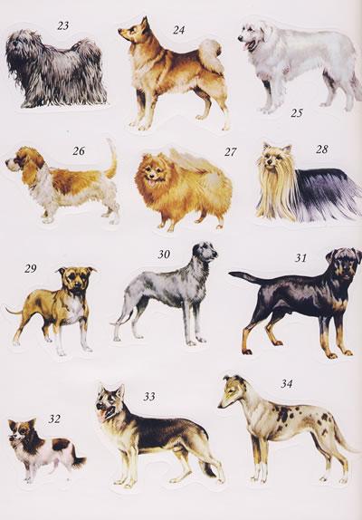狗粘贴画-我的动物贴画小百科 狗