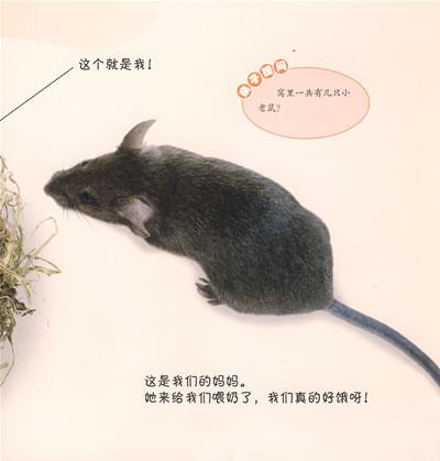 [正版包邮]看小动物成长8:小老鼠/英国dk公司-书籍