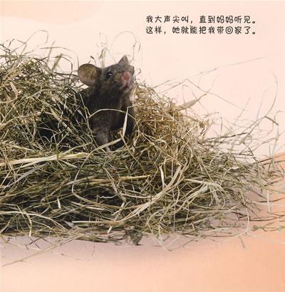 《看小动物成长8:小老鼠》(英国d.)【简介