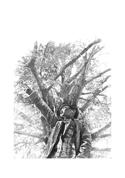 杉树的素描画法