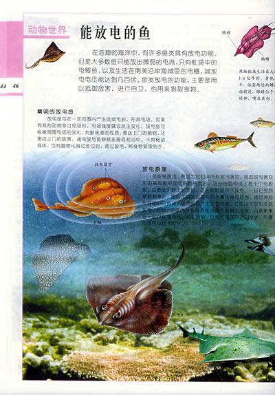 会飞的动物主题封面