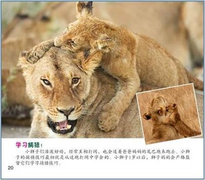 宝宝出生啦!哺乳动物