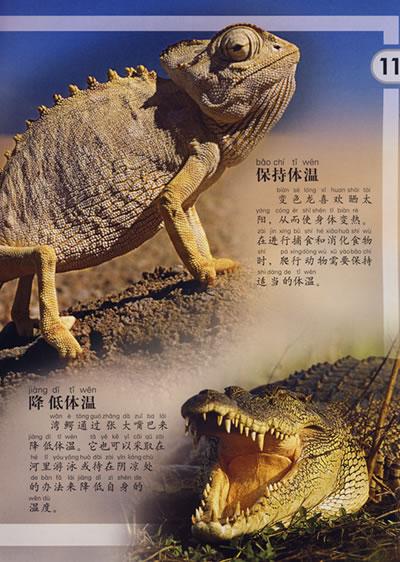 爬行动物/动物小百科